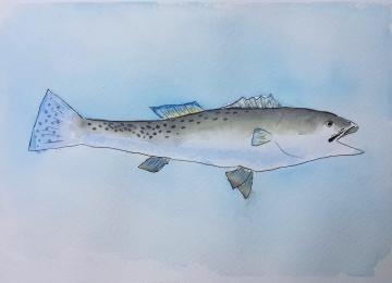 fish_alfred